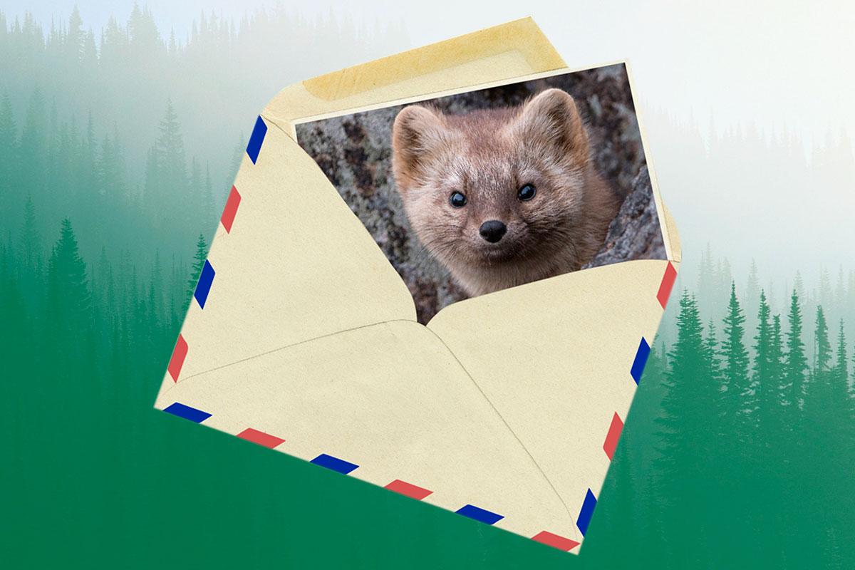 Межрегиональный эколого-просветительский проект «Письма животным»