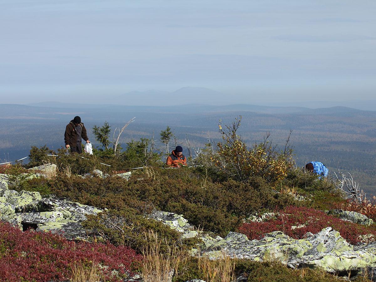 В заповеднике началось изучение верхней границы леса