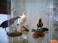 ptici2