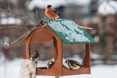 В морозные дни птички не откажутся и от несолёного сала