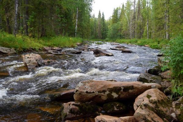 Речка Коростелевка