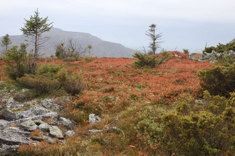 Кустарничковая тундра осенью